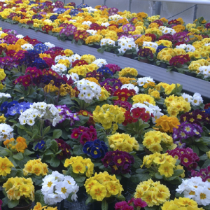 floristik gärtnerei diekmann bild